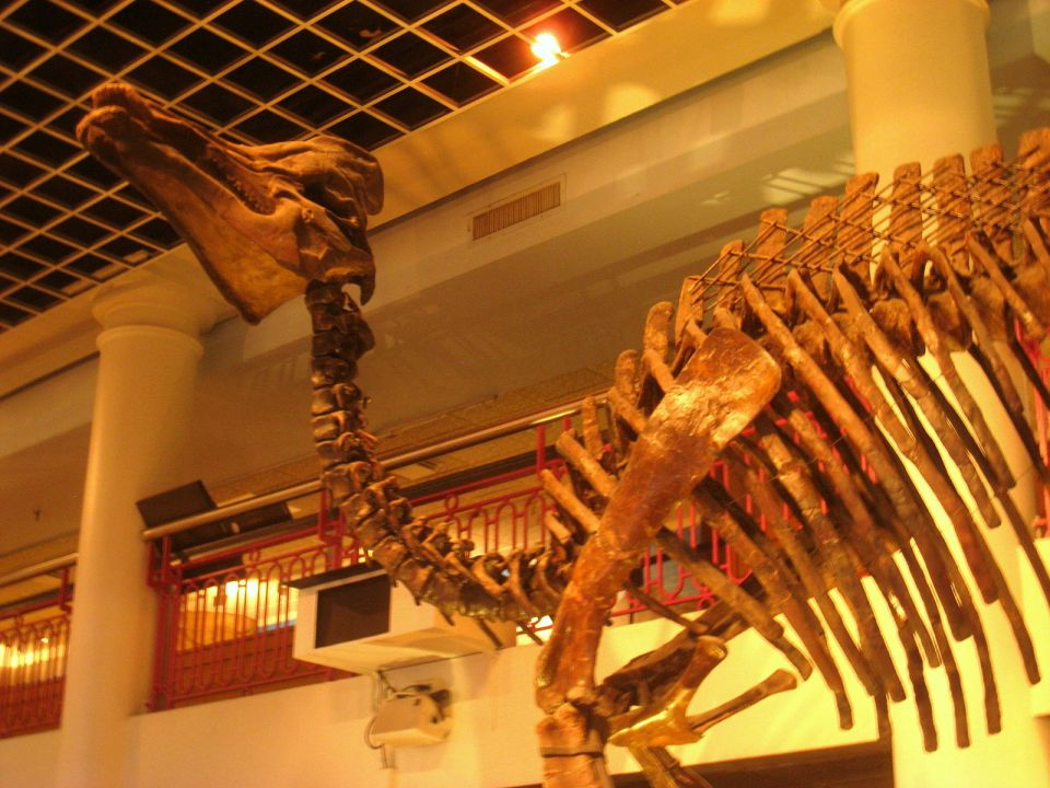 Explore the Natural World at the Academy of Natural Sciences!